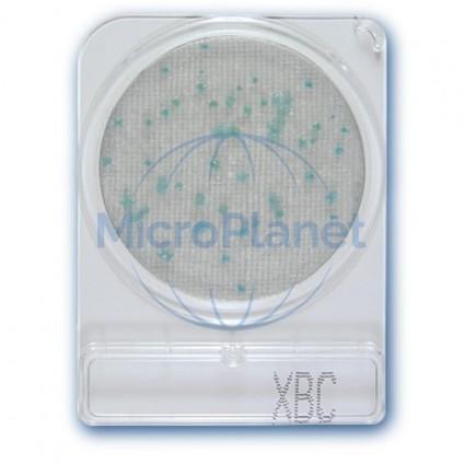 COMPACT DRY XBC, placas para Bacillus cereus. c/ 40 uds.