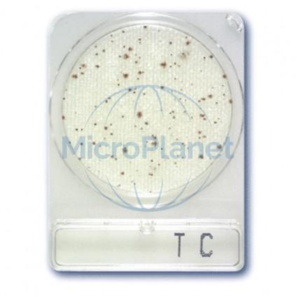 COMPACT DRY TC, placas para recuento total c/1404 uds.