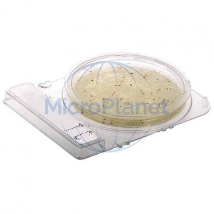COMPACT DRY YMR (RAPID), placas mohos y levaduras (48-72 h) c/40 uds.