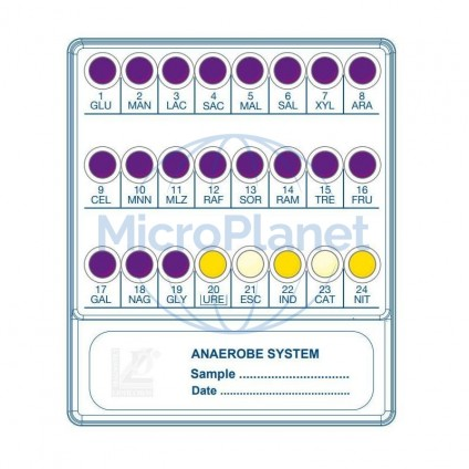 ANAEROBE SYSTEM c/20 test
